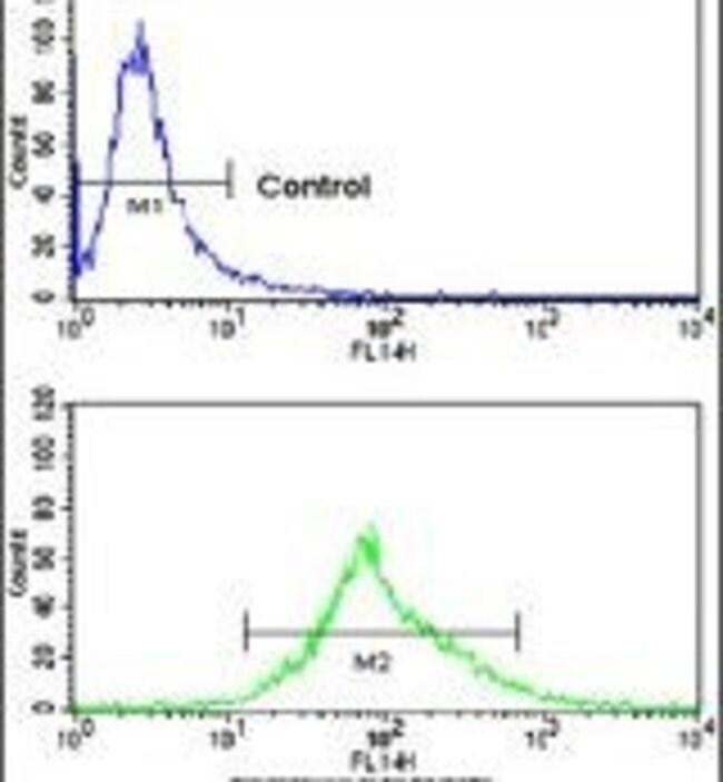 Carbonic Anhydrase XIV Rabbit anti-Human, Polyclonal, Invitrogen 400 µL;