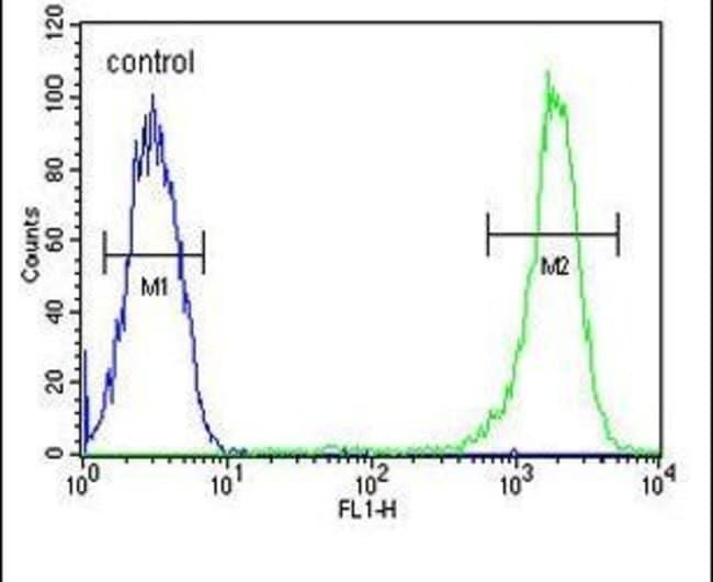 Caspase 3 (Cleaved Asp175) Rabbit anti-Human, Rat, Polyclonal, Invitrogen