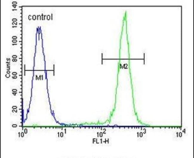 CCDC122 Rabbit anti-Human, Polyclonal, Invitrogen 400 µL; Unconjugated