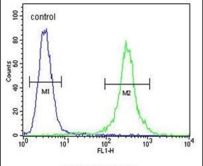 CCR8 Rabbit anti-Human, Polyclonal, Invitrogen 400 µL; Unconjugated