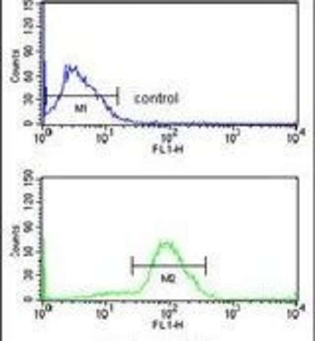 Cdc73 Rabbit anti-Human, Polyclonal, Invitrogen 400 µL; Unconjugated