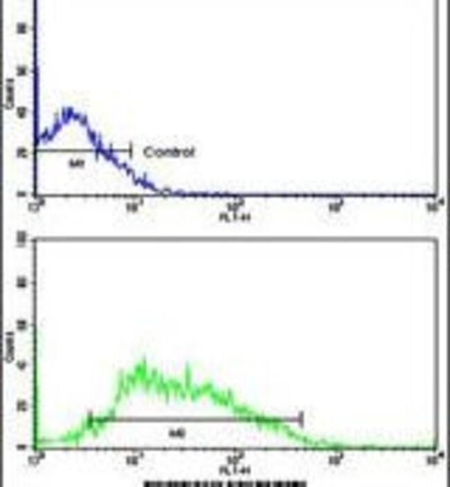 CDCA8 Rabbit anti-Human, Polyclonal, Invitrogen 400 µL; Unconjugated