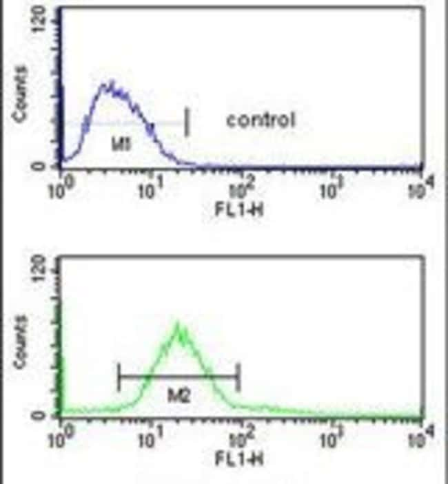 CDIPT Rabbit anti-Human, Mouse, Polyclonal, Invitrogen 400 µL; Unconjugated