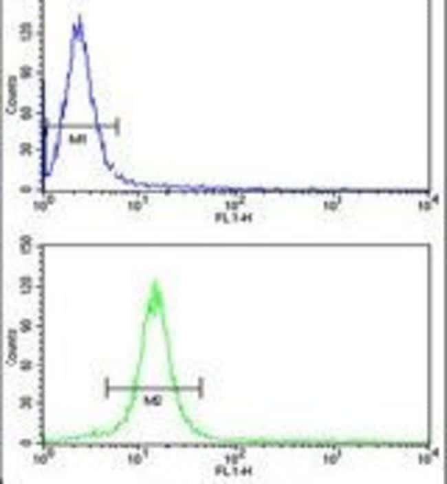 CENPH Rabbit anti-Human, Polyclonal, Invitrogen 400 µL; Unconjugated