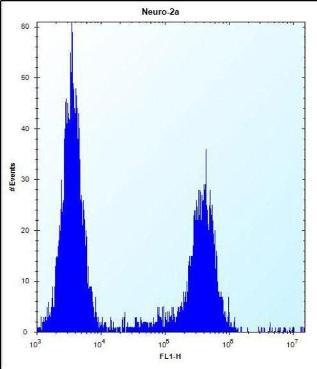 RRP36 Rabbit anti-Human, Mouse, Polyclonal, Invitrogen 400 µL; Unconjugated
