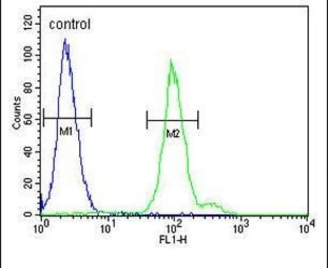 Complement Factor B Rabbit anti-Human, Polyclonal, Invitrogen 400 µL;