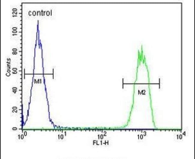 MCMBP Rabbit anti-Human, Polyclonal, Invitrogen 400 µL; Unconjugated