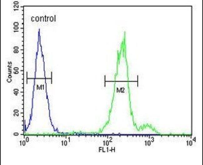 CLRN3 Rabbit anti-Human, Polyclonal, Invitrogen 400 µL; Unconjugated