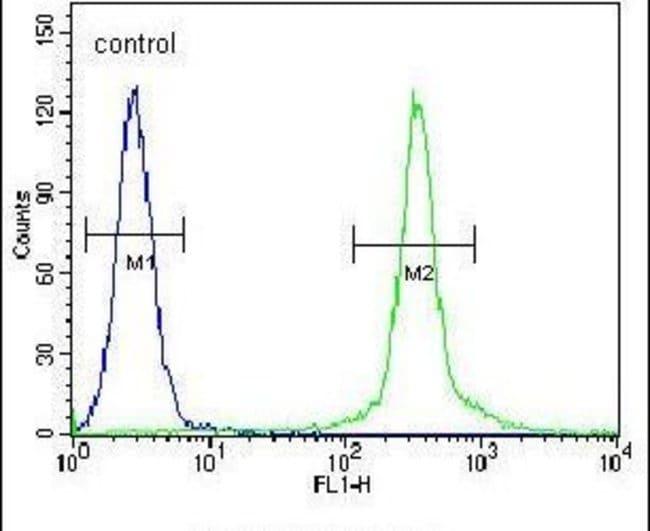CMPK2 Rabbit anti-Human, Polyclonal, Invitrogen 400 µL; Unconjugated