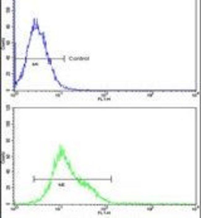 CROT Rabbit anti-Human, Mouse, Polyclonal, Invitrogen 400 µL; Unconjugated