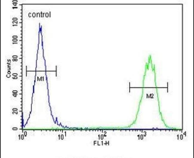 CTDSPL2 Rabbit anti-Human, Mouse, Polyclonal, Invitrogen 400 µL; Unconjugated
