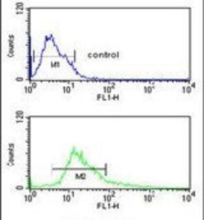 alpha Catenin Rabbit anti-Human, Mouse, Polyclonal, Invitrogen 400 µL;
