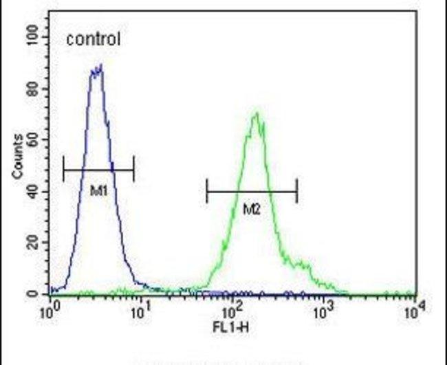 C21orf2 Rabbit anti-Human, Polyclonal, Invitrogen 400 µL; Unconjugated