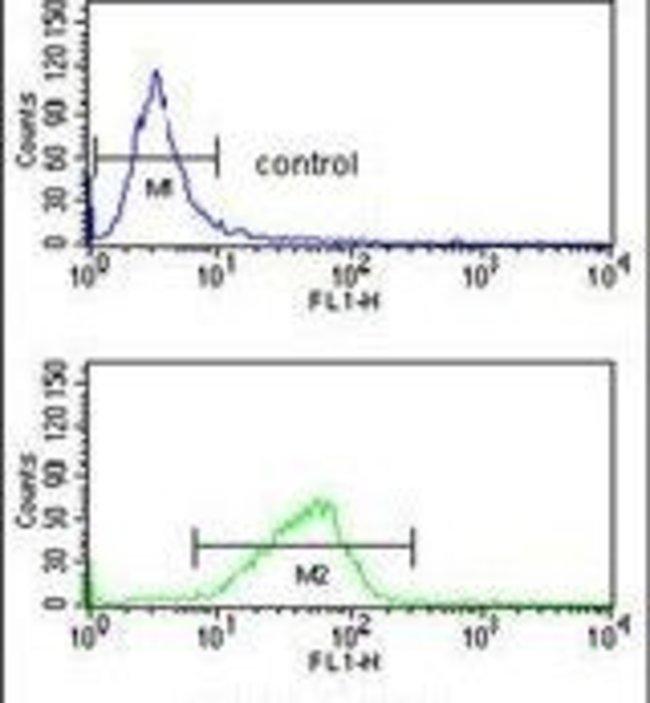 CXXC4 Rabbit anti-Human, Mouse, Polyclonal, Invitrogen 400 µL; Unconjugated