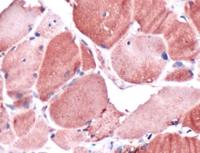 Claudin 10 Rabbit anti-Human, Polyclonal, Invitrogen 1 mL; Unconjugated:Antibodies