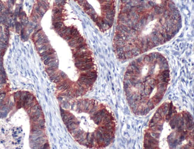 Claudin 7 Rabbit anti-Human, Mouse, Rat, Polyclonal, Invitrogen 1 mL; Unconjugated:Antibodies
