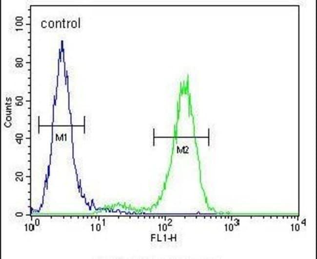 DDX11 Rabbit anti-Human, Mouse, Polyclonal, Invitrogen 400 µL; Unconjugated