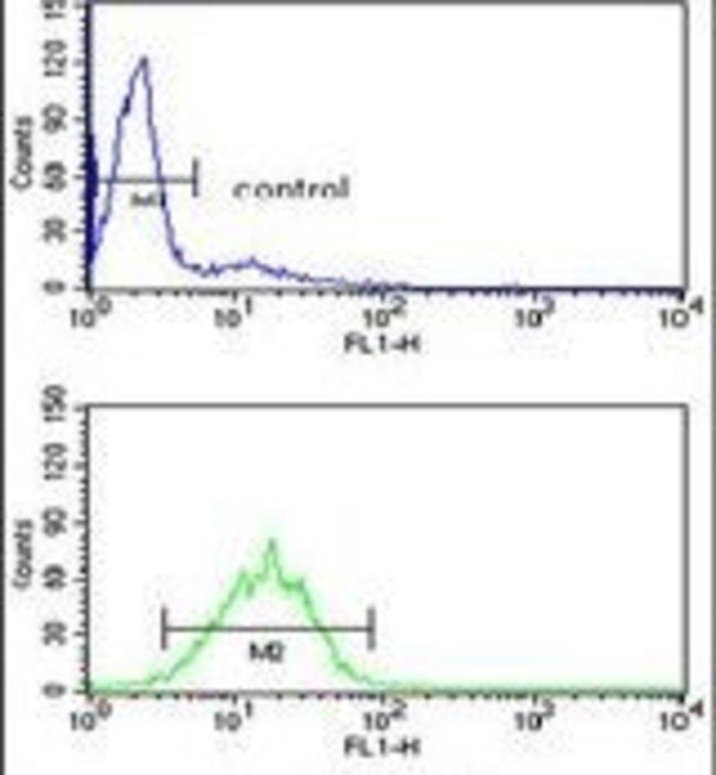 DDX17 Rabbit anti-Human, Polyclonal, Invitrogen 400 µL; Unconjugated