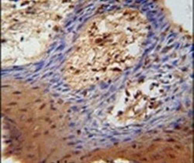 DHRS2 Rabbit anti-Human, Polyclonal, Invitrogen 400 µL; Unconjugated