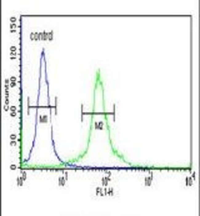 DLG7 Rabbit anti-Human, Polyclonal, Invitrogen 400 µL; Unconjugated