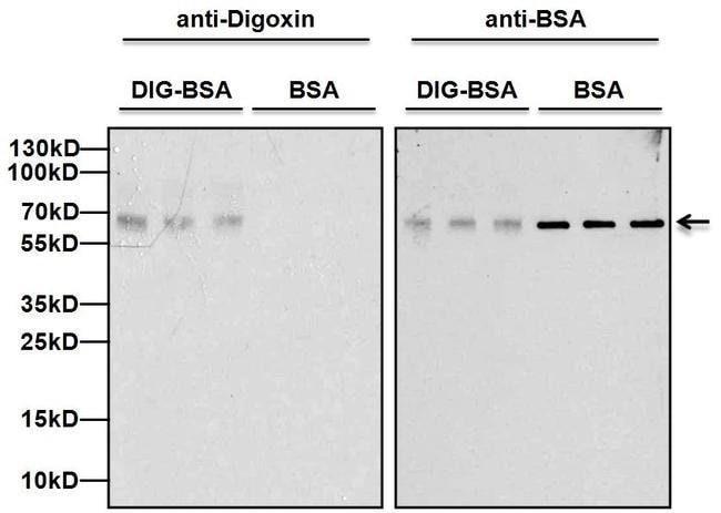 Digoxin Mouse anti-Chemical, Clone: 25P1C9, Invitrogen