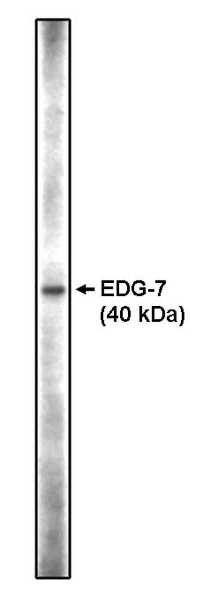 LPAR3 Rabbit anti-Human, Polyclonal, Invitrogen™