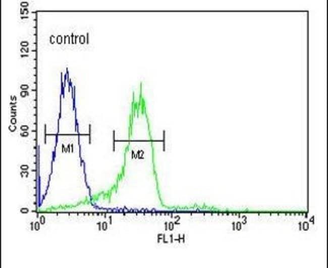 ENAM Rabbit anti-Human, Polyclonal, Invitrogen 400 µL; Unconjugated