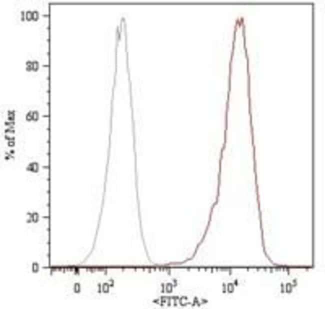 CD105 Mouse anti-Human, Rat, Clone: MEM-226, Invitrogen 100 μg; Unconjugated:Antibodies