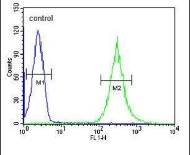 ENPP7 Rabbit anti-Human, Polyclonal, Invitrogen 400 µL; Unconjugated