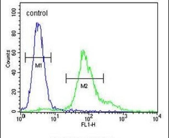 ERO1LB Rabbit anti-Human, Mouse, Polyclonal, Invitrogen 400 µL; Unconjugated