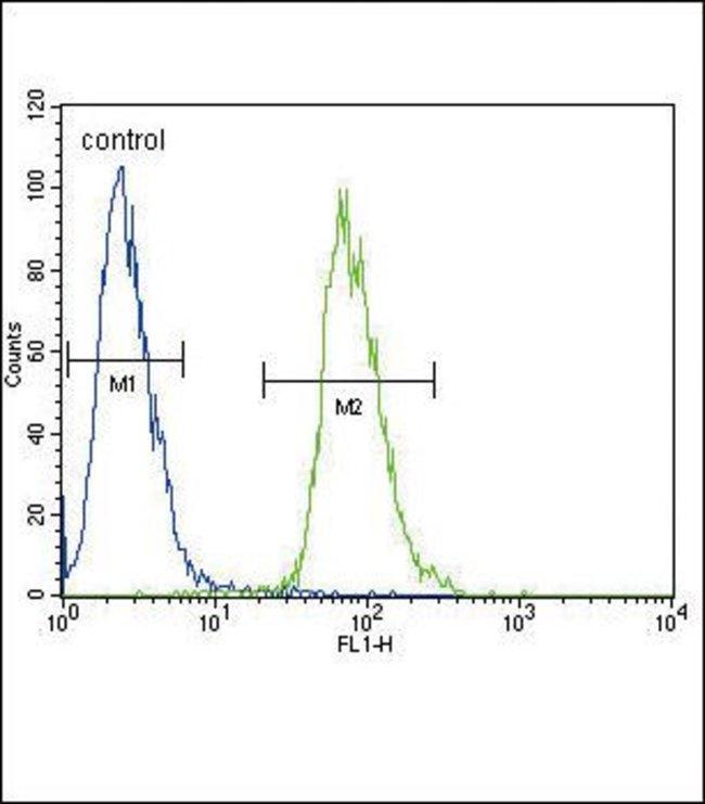 ETV5 Rabbit anti-Human, Polyclonal, Invitrogen 400 µL; Unconjugated
