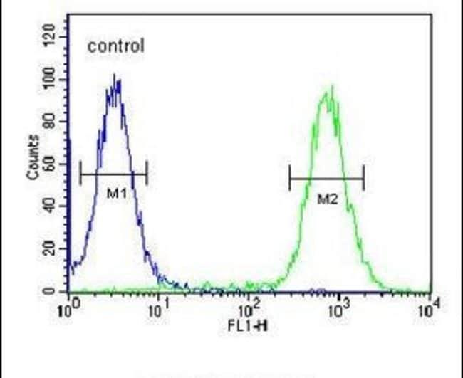 EXOC3L2 Rabbit anti-Human, Polyclonal, Invitrogen 400 µL; Unconjugated