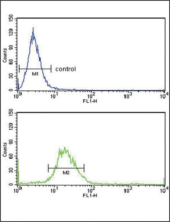 EXT2 Rabbit anti-Human, Polyclonal, Invitrogen 400 µL; Unconjugated