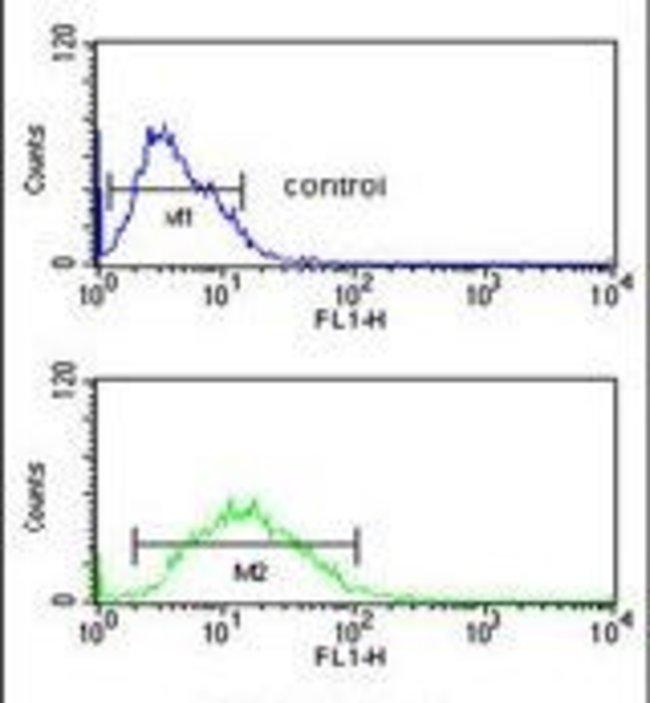 FKBP4 Rabbit anti-Human, Polyclonal, Invitrogen 400 µL; Unconjugated