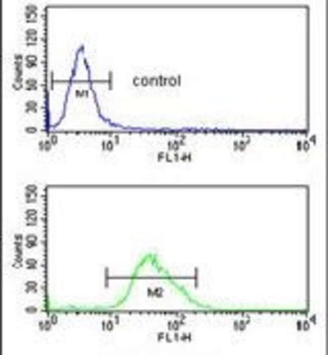FOXG1 Rabbit anti-Human, Mouse, Polyclonal, Invitrogen 400 µL; Unconjugated