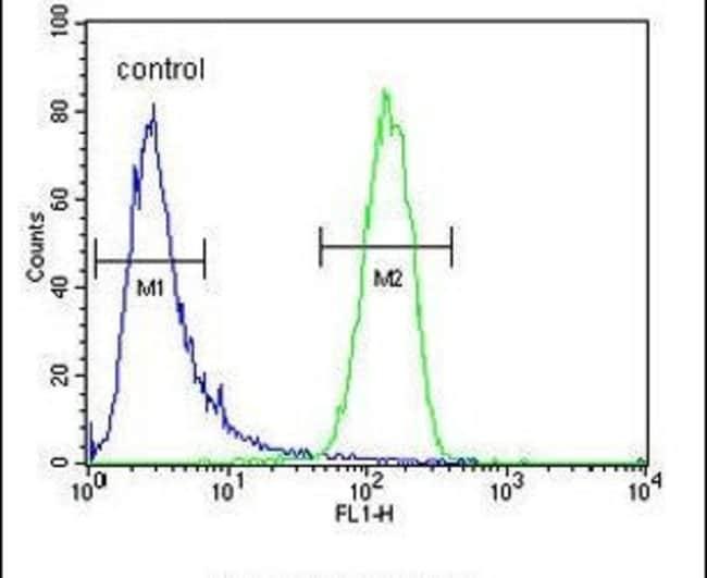 GAGE13 Rabbit anti-Human, Polyclonal, Invitrogen 400 µL; Unconjugated