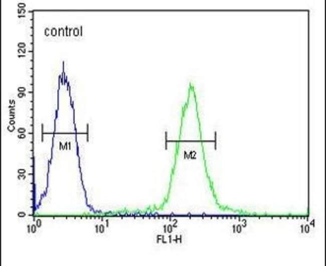 GALNT4 Rabbit anti-Human, Polyclonal, Invitrogen 400 µL; Unconjugated