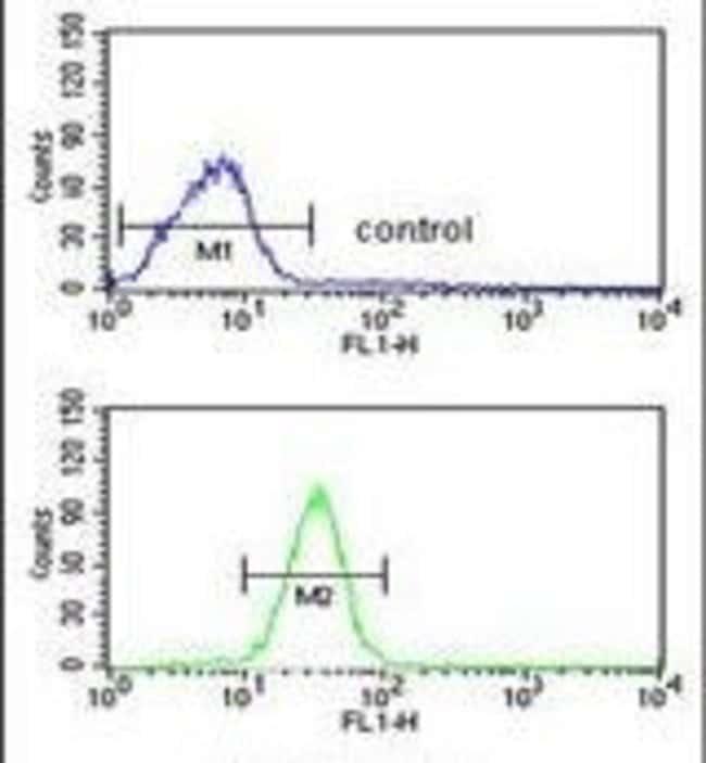 GCLM Rabbit anti-Human, Mouse, Polyclonal, Invitrogen 400 µL; Unconjugated