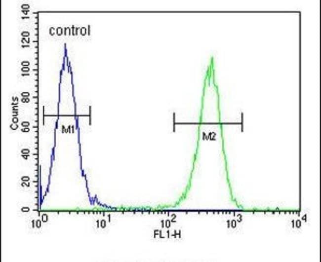 GFPT2 Rabbit anti-Human, Polyclonal, Invitrogen 400 µL; Unconjugated