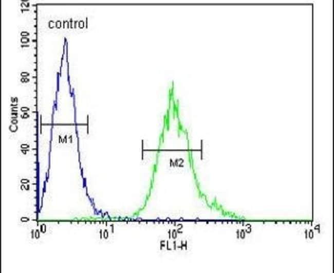 GNB1 Rabbit anti-Human, Polyclonal, Invitrogen 400 µL; Unconjugated