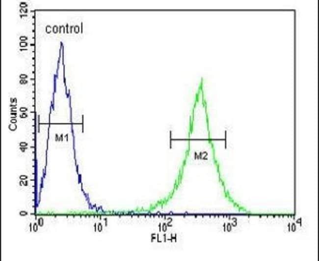 GNE Rabbit anti-Human, Mouse, Polyclonal, Invitrogen 400 µL; Unconjugated