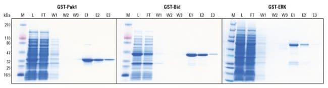 Thermo Scientific™Resina y kits de glutatión-agarosa Pierce™: Purificación de proteínas Extracción y purificación de proteínas