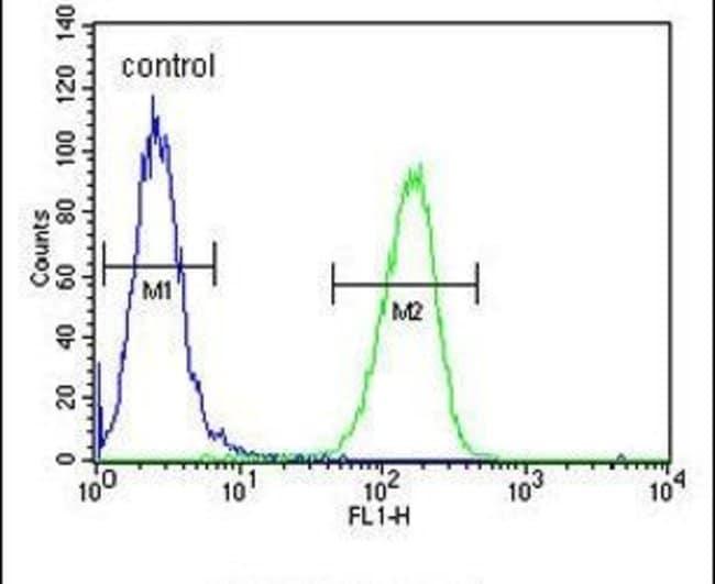 GSTO2 Rabbit anti-Human, Mouse, Polyclonal, Invitrogen 400 µL; Unconjugated