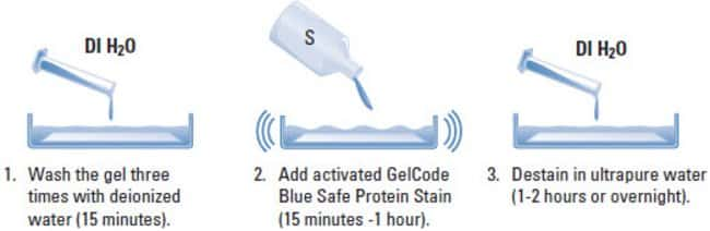 Thermo Scientific GelCode Blue Safe Protein Stain:Electrophoresis, Western