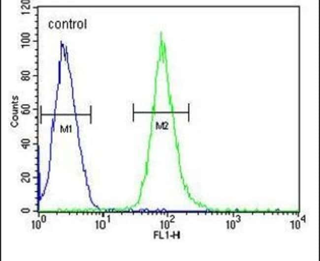 HCK Rabbit anti-Human, Polyclonal, Invitrogen 400 µL; Unconjugated