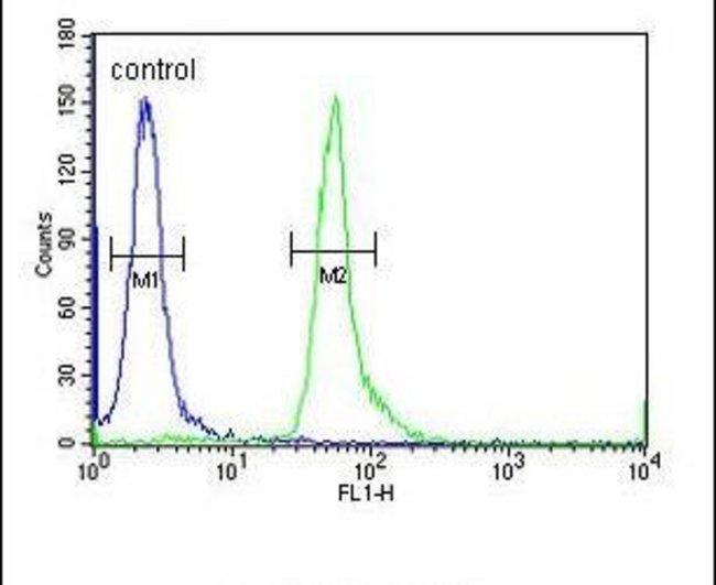HEMK1 Rabbit anti-Human, Polyclonal, Invitrogen 400 µL; Unconjugated