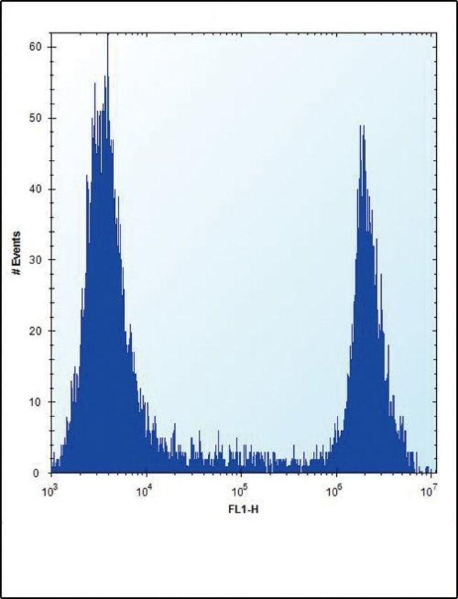 HPRT1 Rabbit anti-Human, Polyclonal, Invitrogen 400 µL; Unconjugated