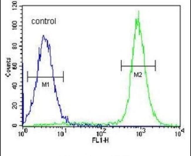 IBTK Rabbit anti-Human, Polyclonal, Invitrogen 400 µL; Unconjugated