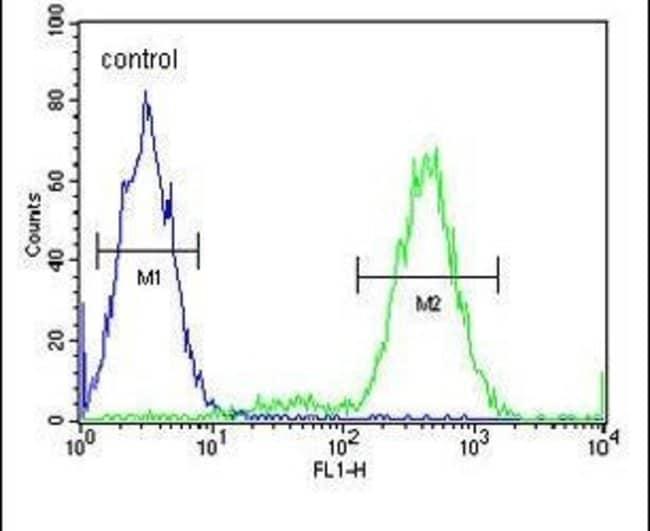 IMMP2L Rabbit anti-Human, Rat, Polyclonal, Invitrogen 400 µL; Unconjugated