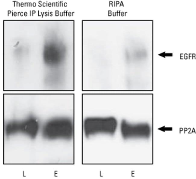 Thermo Scientific Pierce IP Lysis Buffer :BioPharmaceutical Production:Proteomics